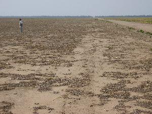 El suelo un recurso no renovable pensamiento y entorno for Recurso clausula suelo