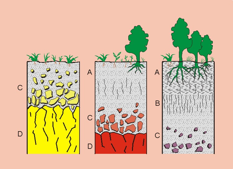 Nov 29, · Uno de los principales recursos que brinda la naturaleza al hombre es el suelo, ya que en él crecen y se desarrollan las plantas, tanto las silvestres como las que se cultivan para servir de alimento al hombre y los liveblog.ga: Resolved.